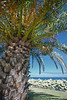 Under a shady palm tree above the fishing village of Mosteiros on Sao Migue island in the Azores