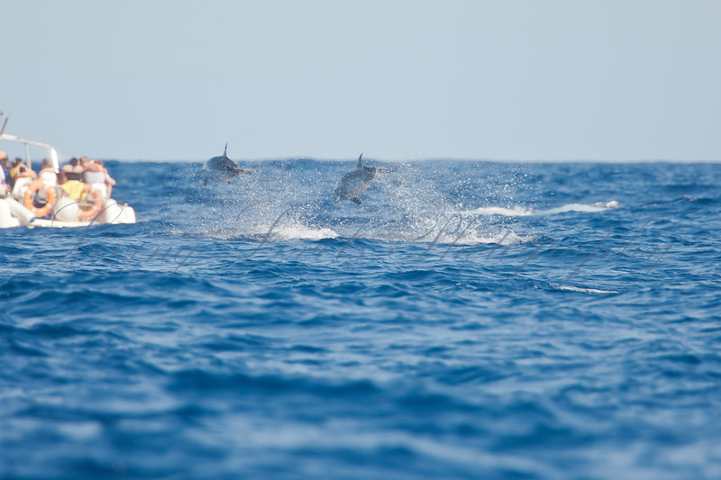 Ecotourists dolphin watching off Sao Miguel island in the Azores