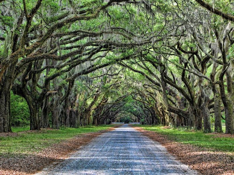Wormsloe Road