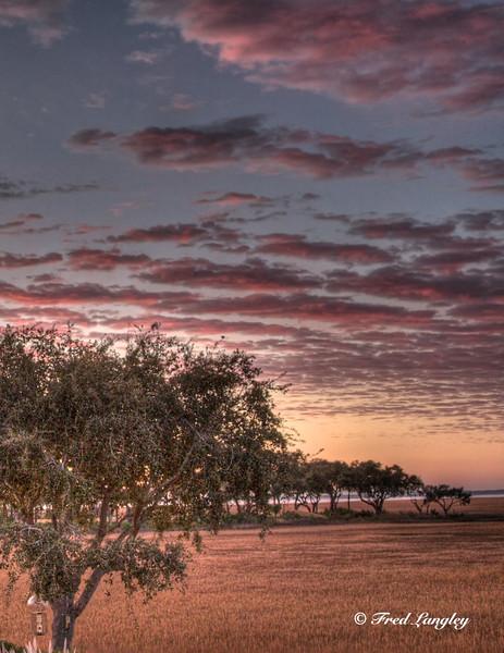Pink Sunrise