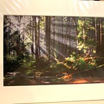 """Rays Through the Redwoods. 24"""" x 32"""" Fine Art Matted print. Print size is 16"""" x 24"""". Arctic white acid-free 8-ply thick mat with an acid-free foam core backing in a crystal clear sleeve. These are ready to be framed. Normally $450 each, SALE $75 each.  I can provide professionally-finished custom framing as well."""