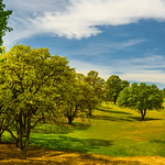 """SOLD!!  58"""" x 40"""" HD Acrylic non-glare. """"Oaks in the Meadow"""" Normally $2495.  SALE $399.  Condition 10/10.    HD Acrylic Prints are prints between a sheet of crystal clear Acrylic and backed floating about a 1/2"""" off the wall.  These just glow on your walls.   --- Yosemiteguy  @ jharrisonphoto.com"""