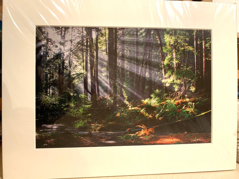 "SOLD!!  Rays Through the Redwoods. 24"" x 32"" Fine Art Matted print. Print size is 16"" x 24"". Arctic white acid-free 8-ply thick mat with an acid-free foam core backing in a crystal clear sleeve. These are ready to be framed. Normally $450 each, SALE $50 each.  I can provide professionally-finished custom framing as well."
