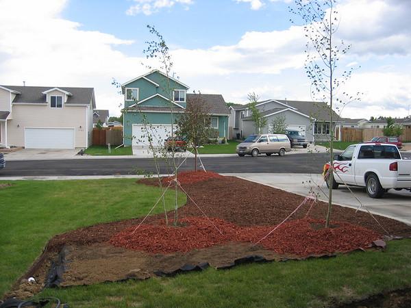 Front yard, June 6-7 2009