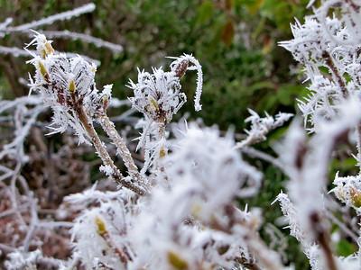 Frosty Day in Yeovil