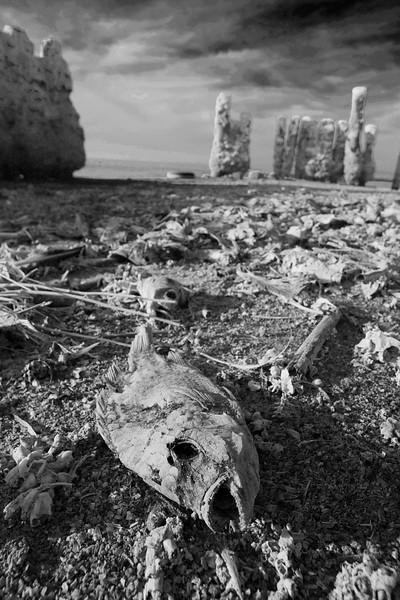 GALLERY | The Salton Sea