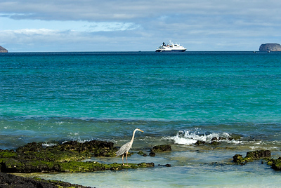 Galapagos Trip - Galapagos, Bachas Beach, Santa Cruz Island<br /> Great Blue Heron in foreground, Xpedition is background