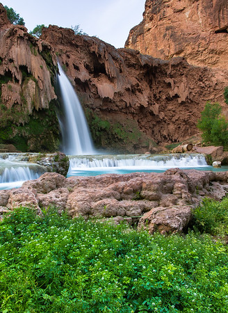 Havasupai Wildflowers