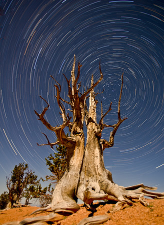 Cedar Breaks Bristlecone Startrails-Edit