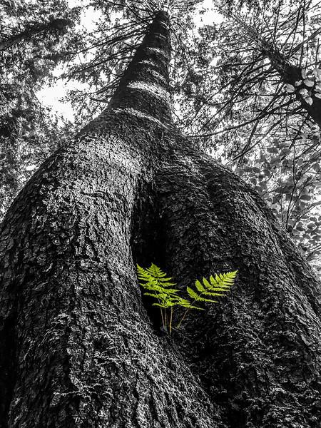 Symbiotic Fern