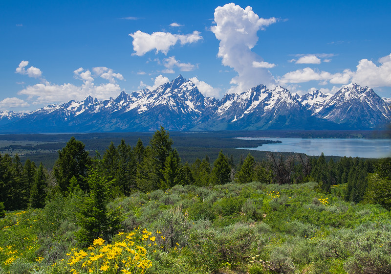 Tetons from Signal Mt.