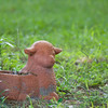 Lamb Planter in Garden_SS10965