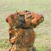 Limestone Iron Rock_SS65638