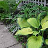 Hosta, Japenese Painted Fern, and Gooseneck