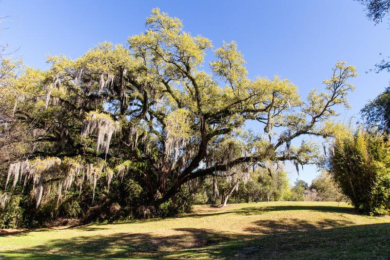 Sunny Oak