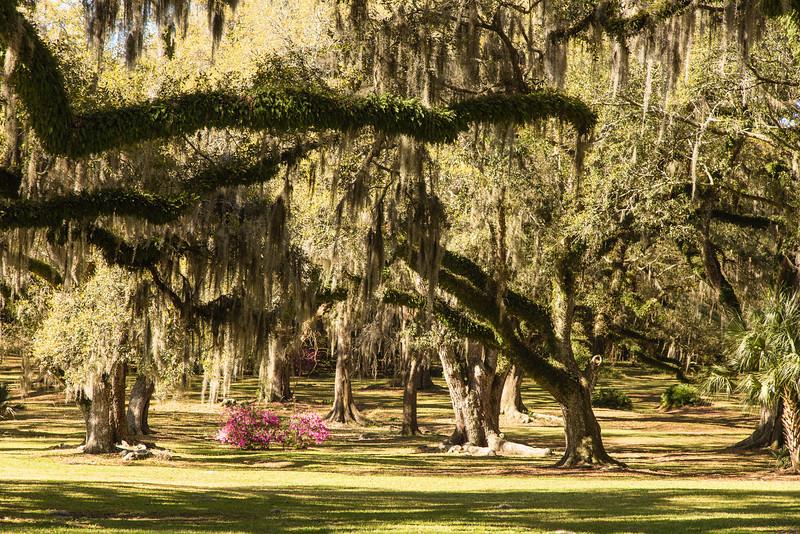 Mossy Oaks 1