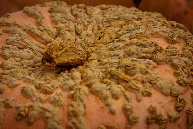 Peanut Pumkin