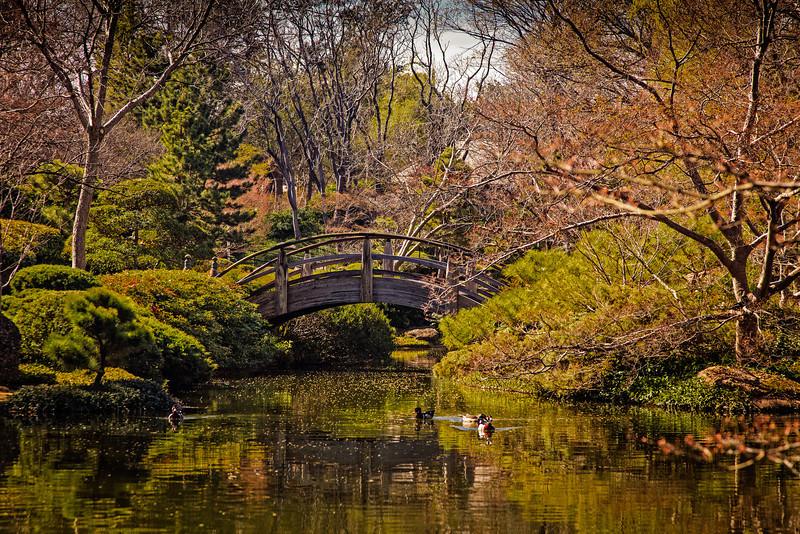 Japanese Water Garden 3
