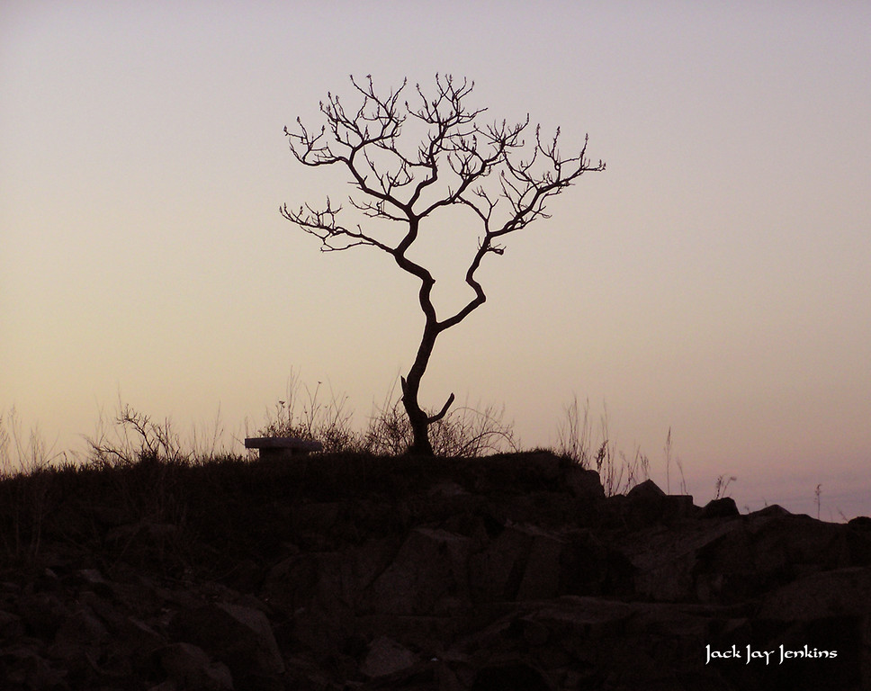 Sunrise on Garrish Island.