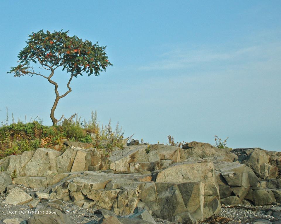 The lone tree amid the rocks.