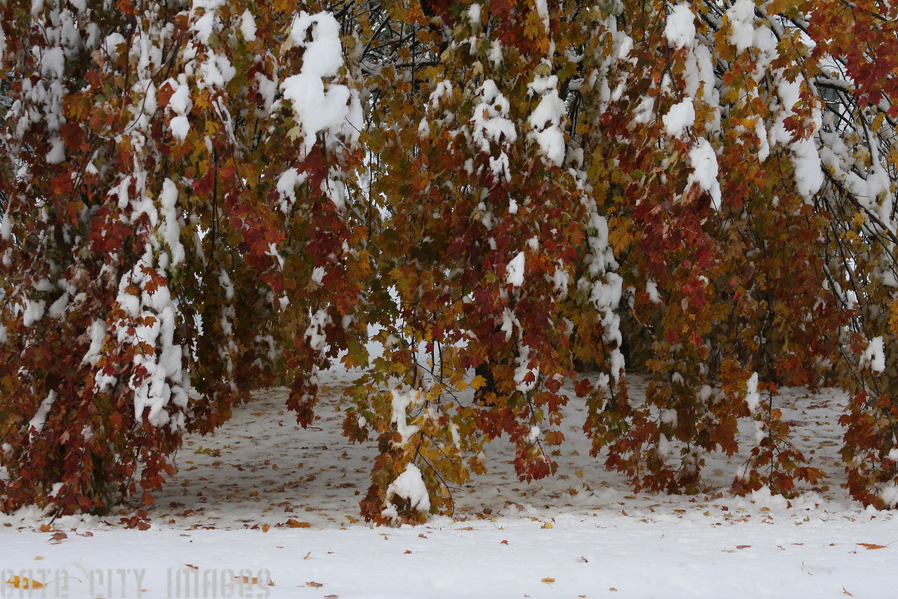 IMG4_22518 Oct storm trees