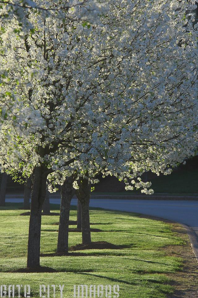 IMG4_37440 Trees DPPtrm