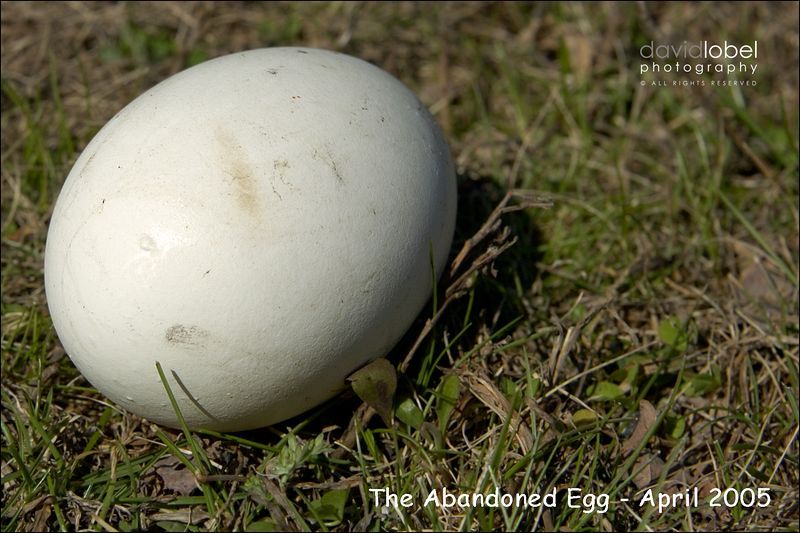 An egg, thougt to be abandoned from its parents, rests in the parking lot  the Woodbury Jewish Center.