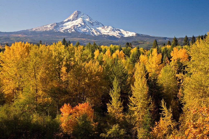 Mt Hood in the Fall