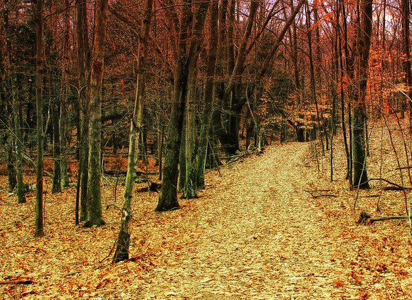 Trail in Woods, East Haddam, CT