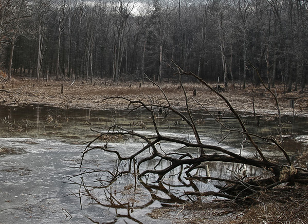 Swampy Pond, East Haddam, CT