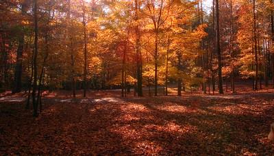 Simpsonwood, GA in the fall