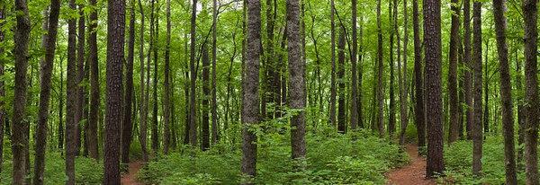 Off walking trail in Simpsonwoods, GA