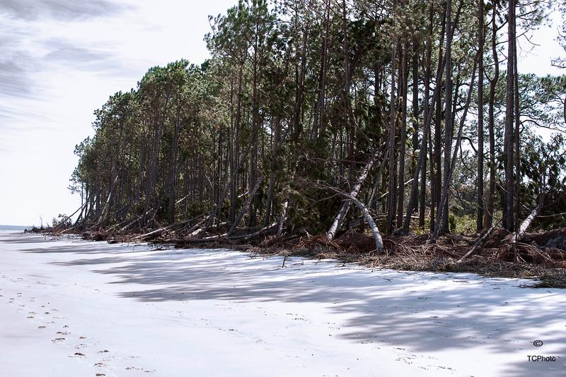 After Hurricane Mathew