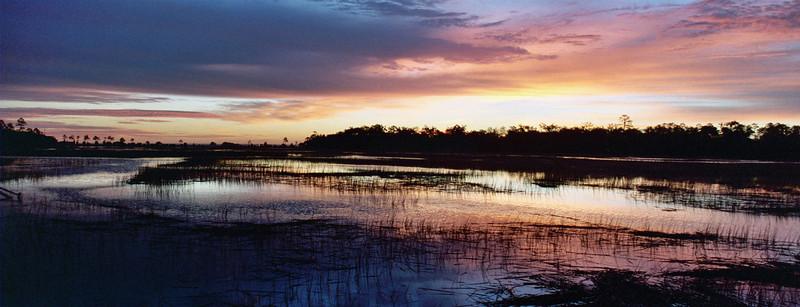 Panorama Georgia Swamps
