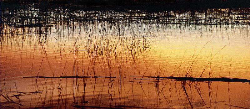Georgia swamp grass Georgia Swamps