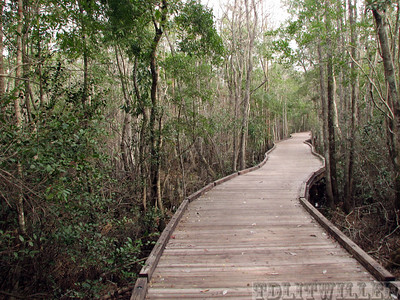 Boardwalk, Okefenokee Swamp State Park, GA
