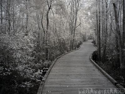 Okefenokee Swamp State Park, GA infrared   taken with an R72 filter