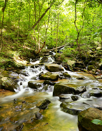 Amicalola Falls Stream 4