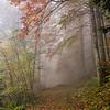 Misty Bavaria