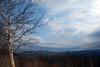 Birch tree in late afternoon- Rte 7 trail (Fri 3/12/10)