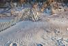 Dune line (Fri 4 17 09)