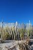 The dune ( P o' W- Sun 10 28 08)
