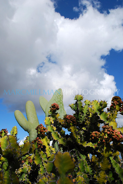 Desert Garden2 (Balboa Pk- San Diego- Tue 2 17 09)