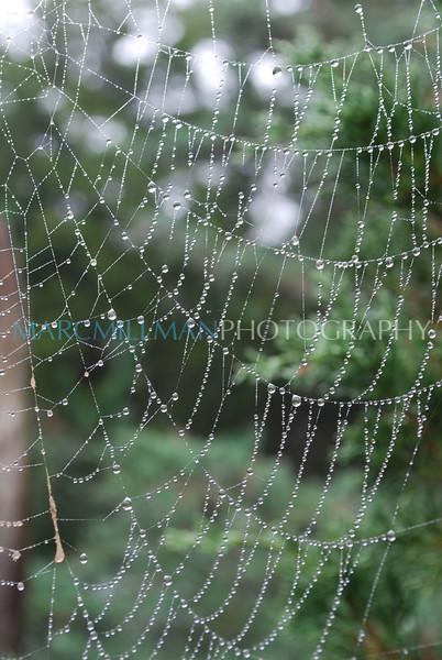 Rainy web (Sun 9 28 08)