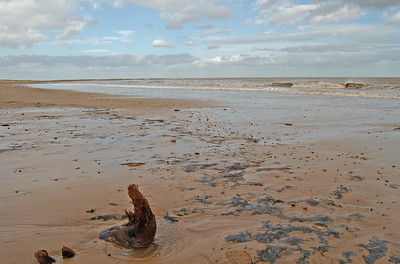 During the last Ice Age sea levels were lower than today, and much of the North Sea was forested. Fishermen regularly find the remains of mammoth and other animals in their nets, and ancient tree remains can be seen on the beach.