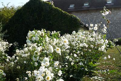 Jardin du Claude Monet - Giverny 2008