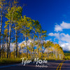 1457  G Aspens Along Road Soft