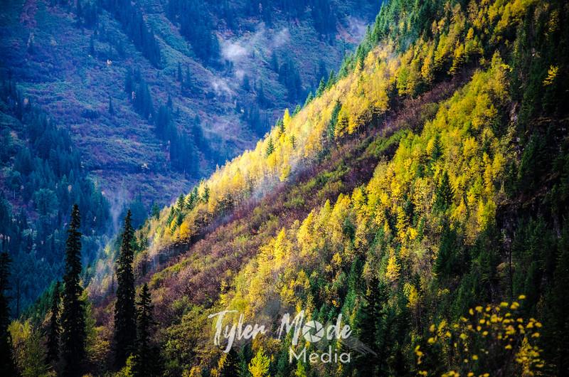 1573  G Hillside Fall Color Sharp