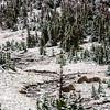 1599  G Snowy Logans Pass V