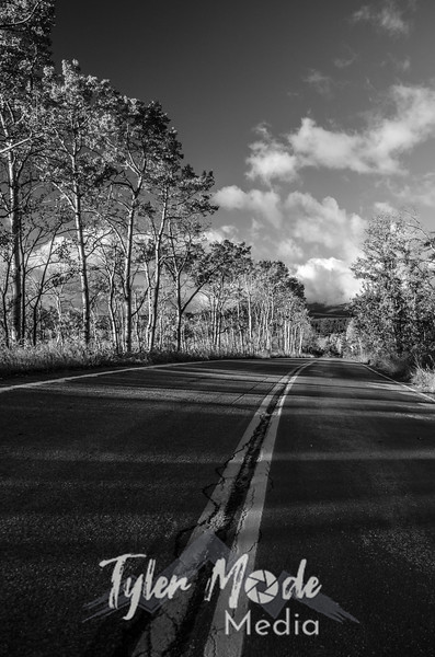1462  G Aspens Along Road Sharp BW V